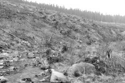 einige wenige Birken am Ilseufer