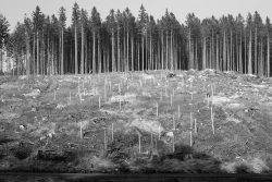 Wildschutzzäune um jeden einzelnen Laubbaum an der Bremer Hütte