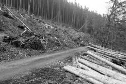 industrielle Holzernte im Nationalpark