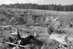 Großkahlschlag an Bremer Hütte ohne Naturverjüngung