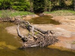 tote Erle auf nacktem Uferboden
