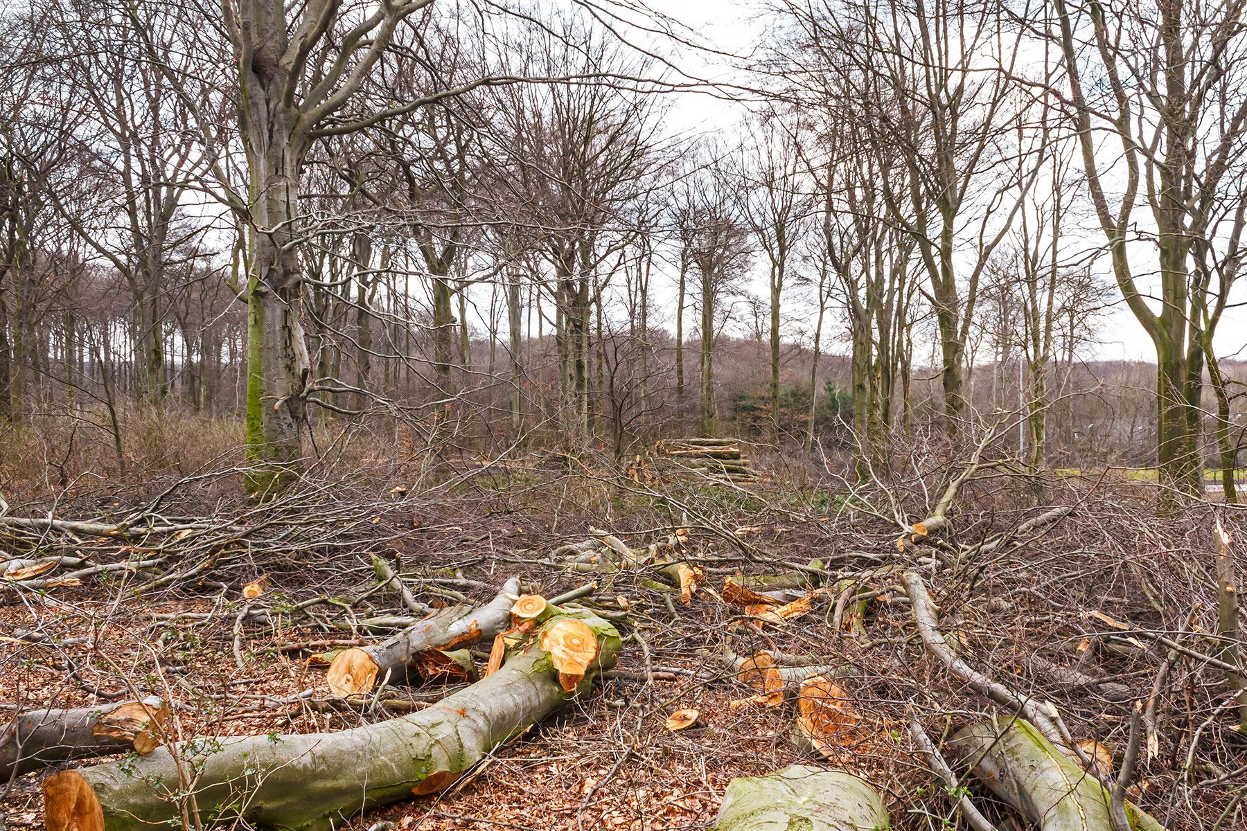 aufgerissener Waldrand