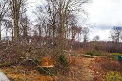 Zerstörung des geschlossenen Waldrands durch Fällungen
