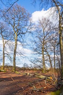 Baumabstände wie in einem englischen Landschaftspark