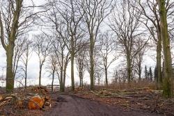extrabreite Fahrwege im stark aufgelichteten Restwald
