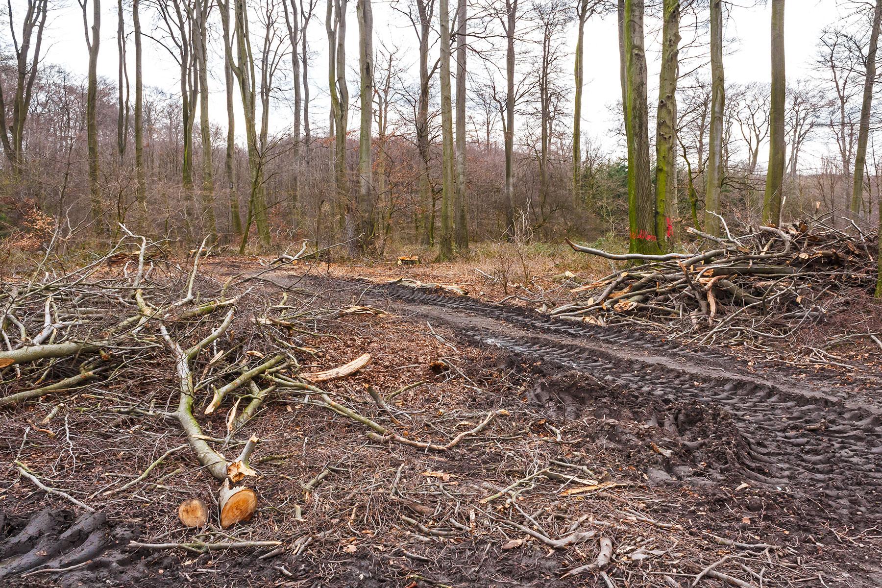 Bodenverdichtung durch tonnenschwere Holztransporter