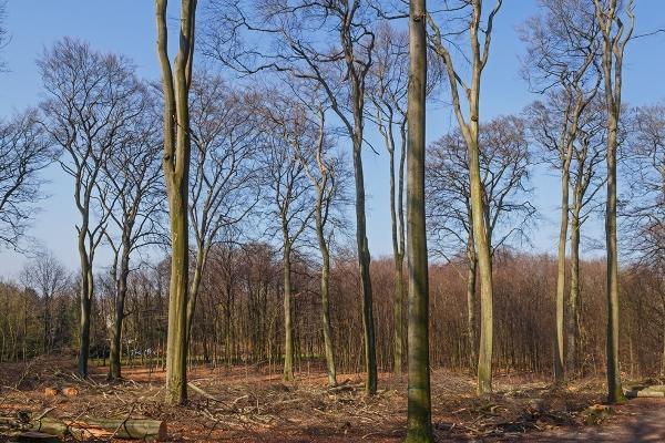 """Waldpflege"" am Schrülkampweg"