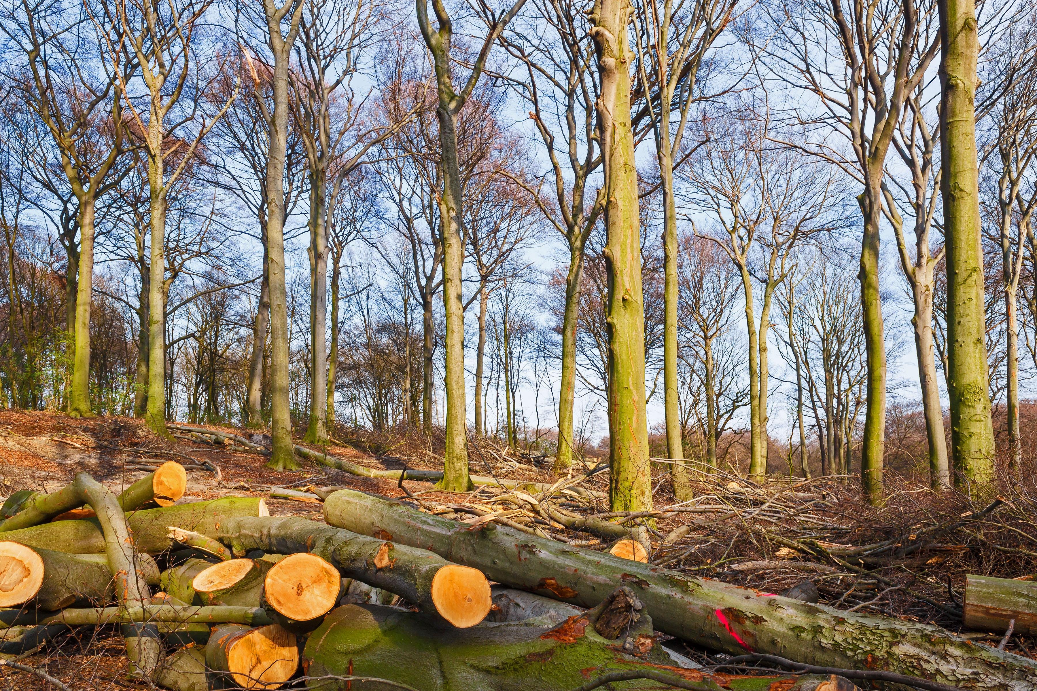 Hiesfelder Naturwaldzelle am Nachmittag nach der Tat