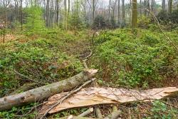 von Brombeeren zugewucherter Waldboden