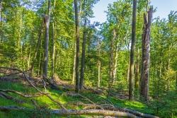Totholzreichtum auf Windwurffläche
