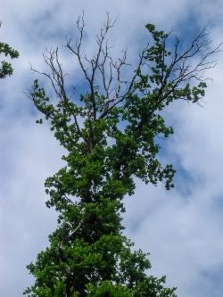Habitatbaum mit Pilzen