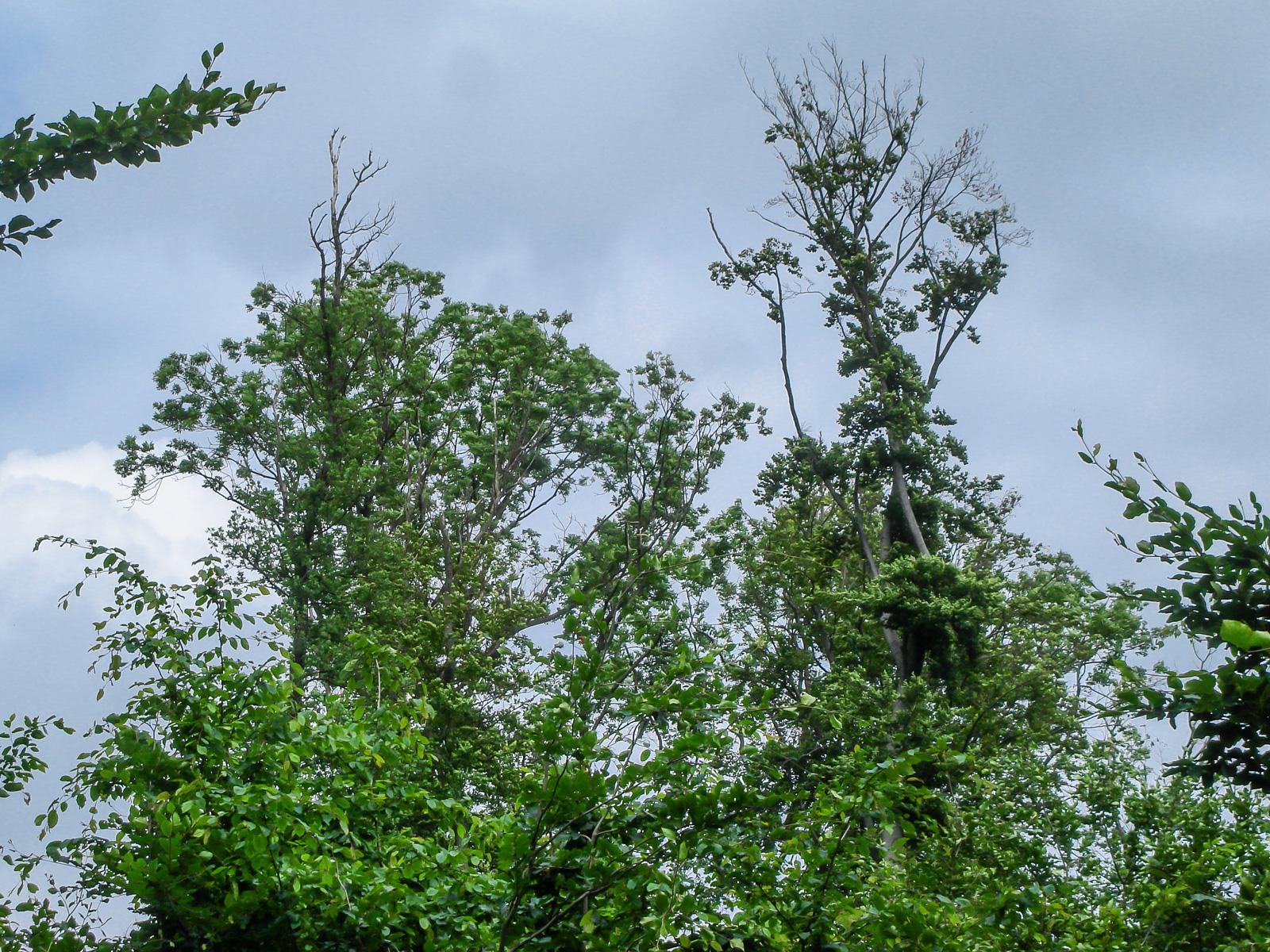 Kleine Gruppe von Altbäumen