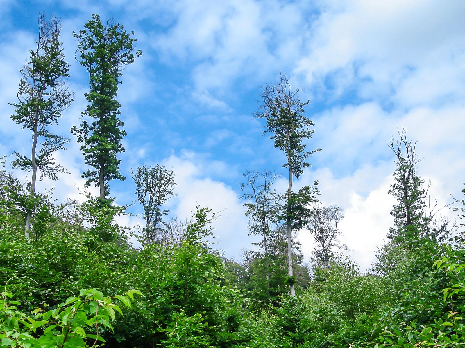 Hübsches Ensemble von Habitatbäumen