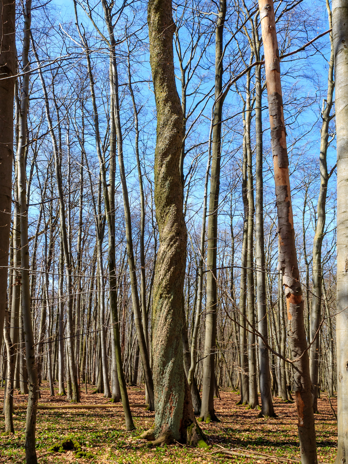 eiche ( quercus robur ) | holzwurm-page, holz mit know how, Schlafzimmer entwurf