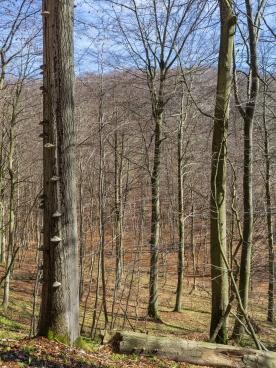 Blick ins Lange Tal
