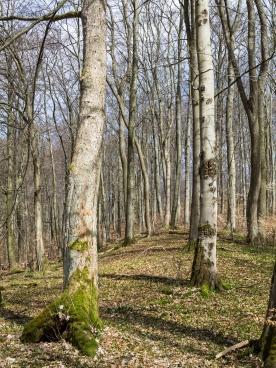 Mischwald im Langen Tal