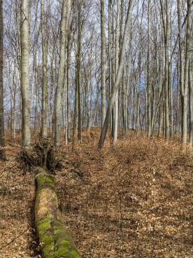 Moosüberwachsenes Totholz