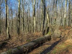Mächtiger Totholzbaum
