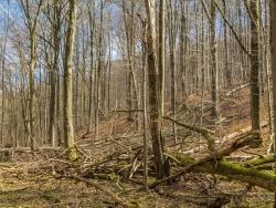Totholz im Langen Tal