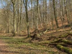 Urwald am Fuß des Zimmerbergs