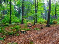 Baumstümpfe am Wegesrand