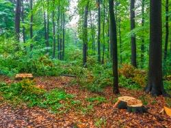 freigeschlagene große Lücken im Wald
