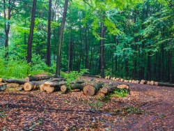Sammelplatz für Eichen- und Buchenlangholz
