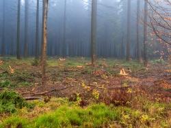die 4 Bäume rechts haben Rückeschäden