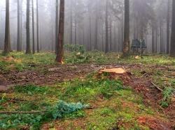 konzeptloser Holzeinschlag in Zone 1c