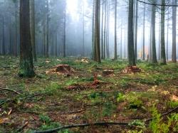 Prozessschutzzone 1c: künstlich mehr Natur schaffen