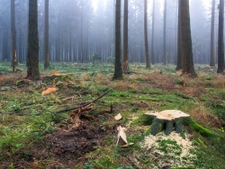 Waldumbau im Nationalpark Eifel