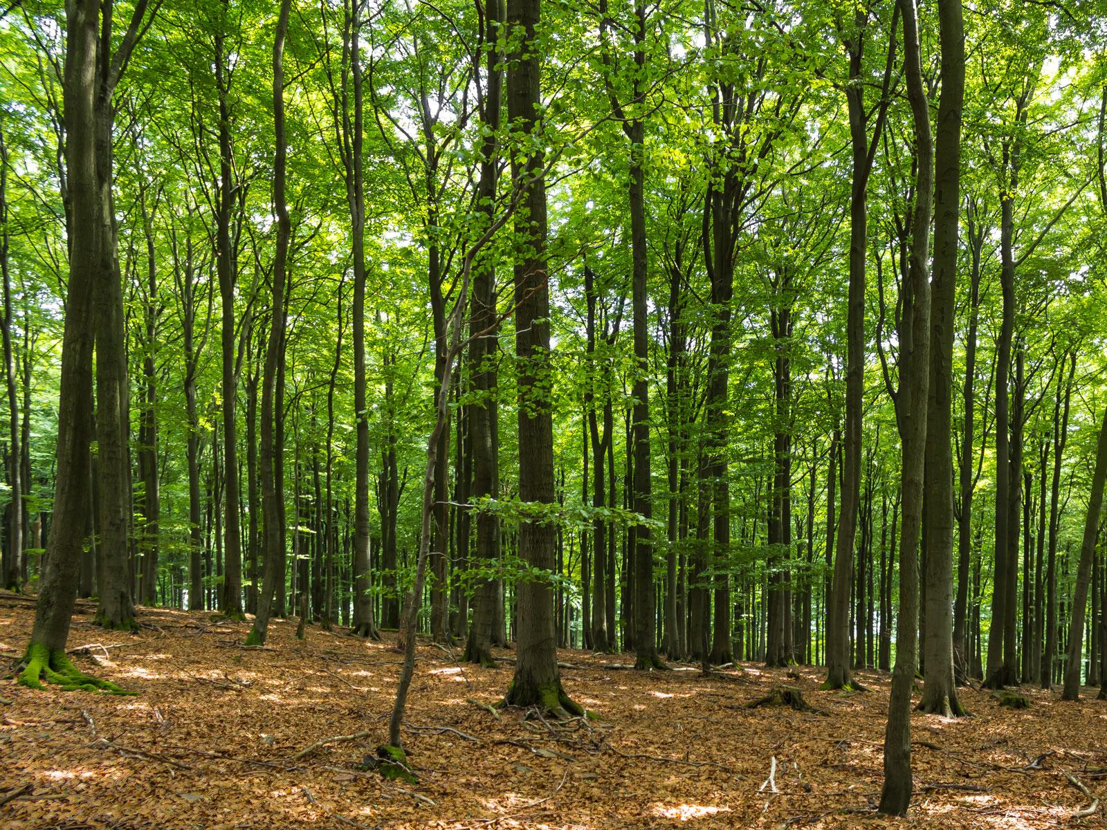 Naturwald im Sonnenschein