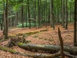 liegende und stehende Biotopbäume