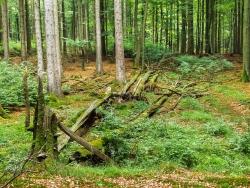 Biotopbäume und Naturverjüngung