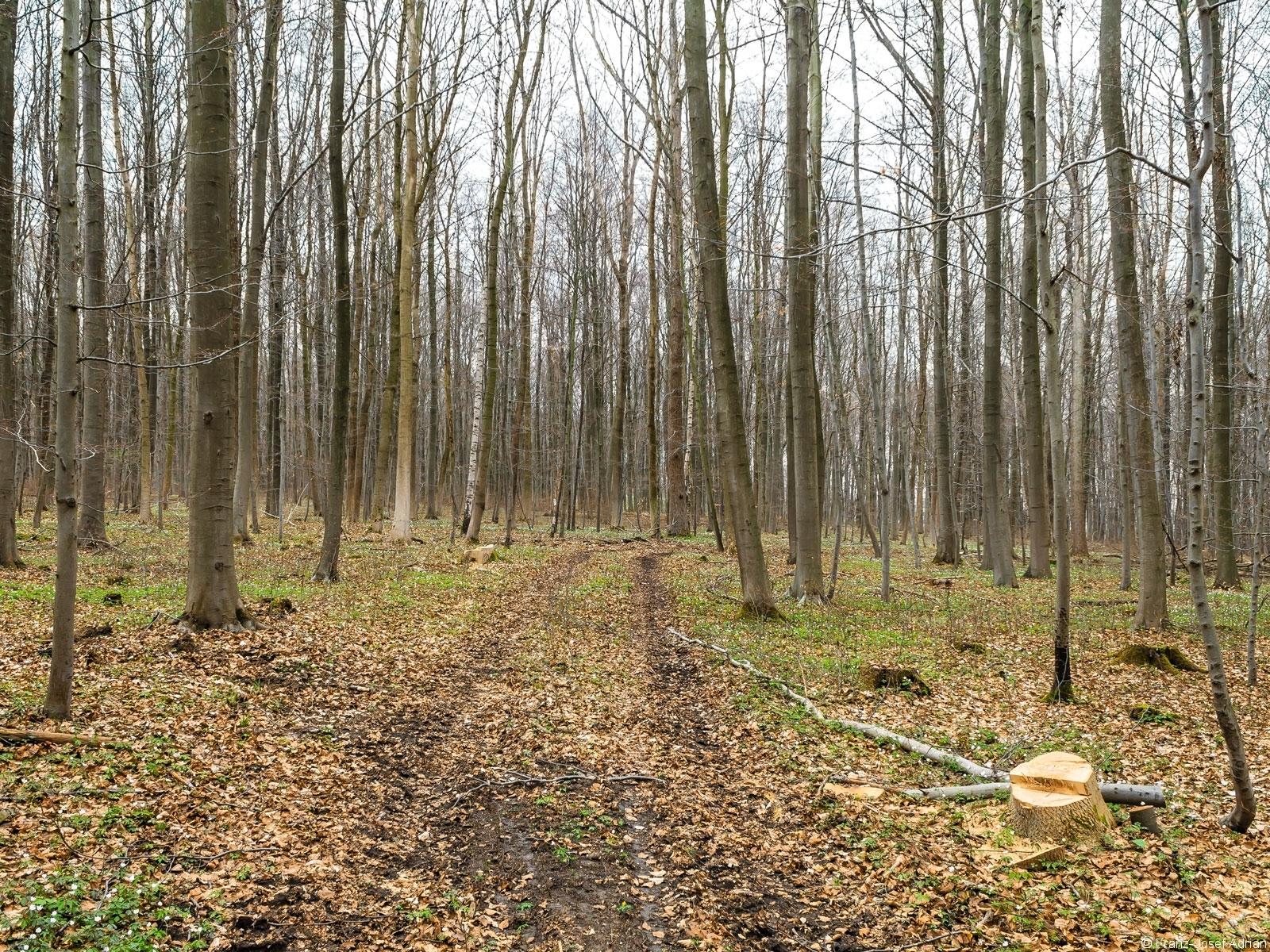 Rückegassen mit 2 Baumstümpfen