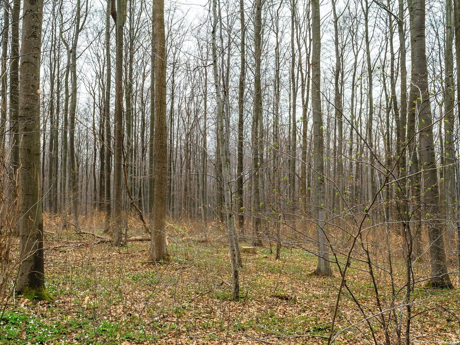 gut versteckter Baumstumpf
