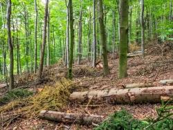 holzarmer Wald mit nur wenigen Bäumen nach der Durchforstung