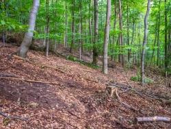 geschädigter Waldboden, weite Abstände zwischen den Bäumen