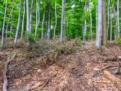 sogenannte ordnungsgemäße Forstwirtschaft