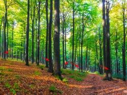 5 markierte Bäume