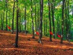 4 markierte Bäume