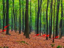 6 markierte Bäume