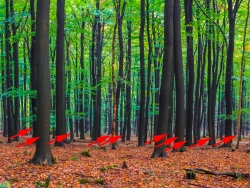 10 markierte Bäume