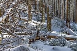 Brockenurwald am Eckerloch