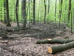 Kronenabfälle und Baumstämme