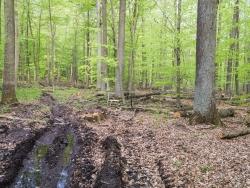 Verwüsteter Wald