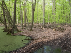 Baumabfälle neben Tümpel
