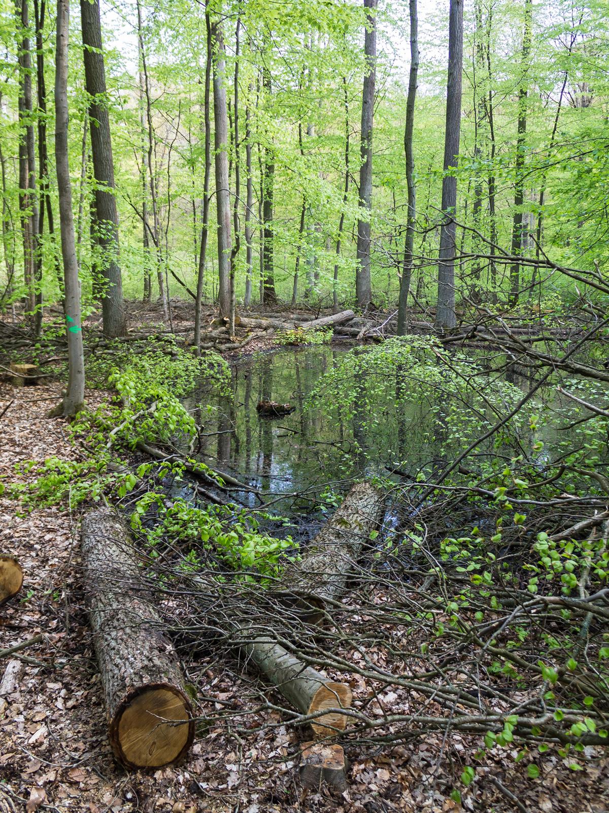 Baumabfälle in einem Tümpel