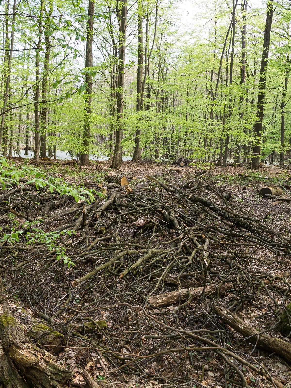 Kronenabfälle auf Waldboden