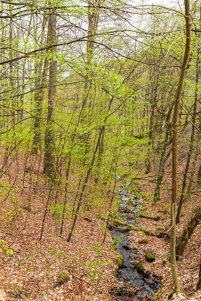naturnaher Bach im Buchenwald